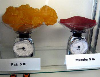 Fat and Muscle what are you made of?